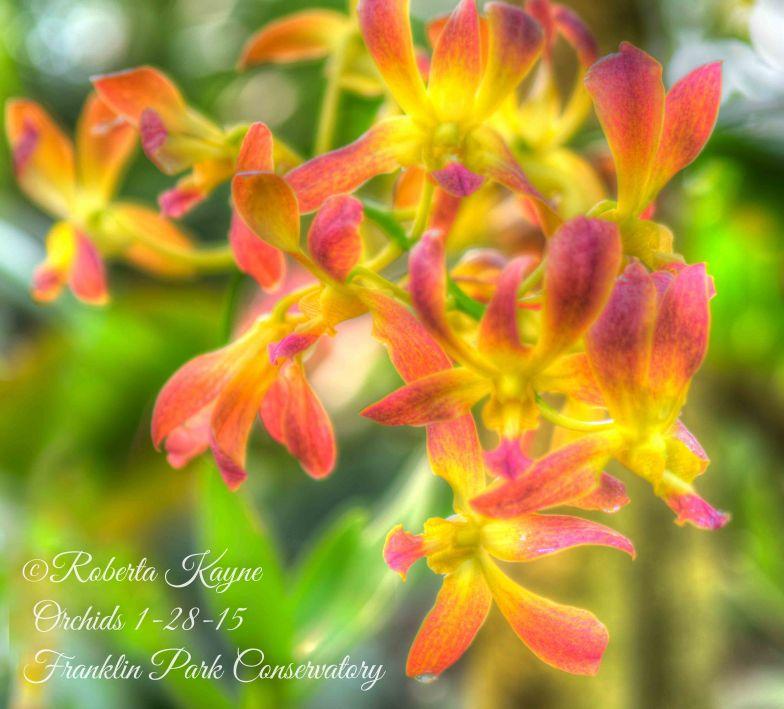 1-28-15 Orchids FPC-4758_59_60_61_62_63-Edit