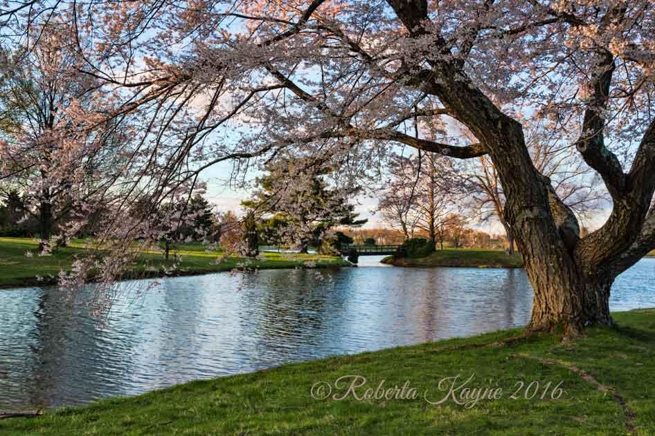 4-2-16-Dawes-Arboretum-810-1237-Edit-small-