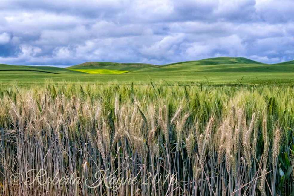 6-18-16-Palouse-XT1-7594-PShop-Color-FX-Tonal-small